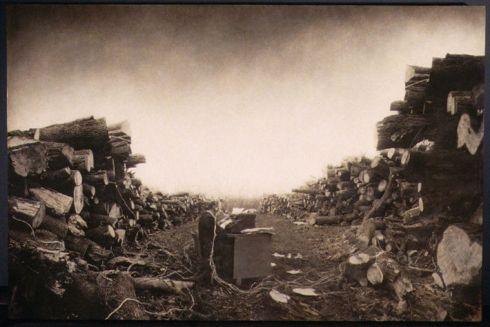 Robert ParkeHarrison - Tree Stories